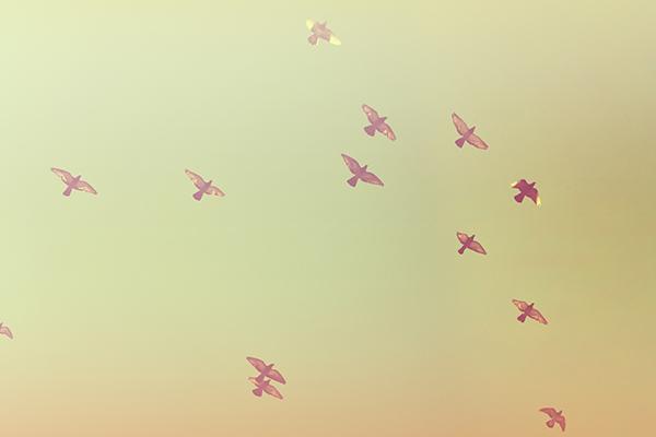 Ipad タブレット壁紙ギャラリー: Ipad タブレット用無料壁紙ダウンロード:空に飛ぶ鳥たち