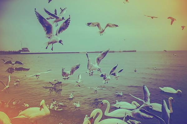 Ipad タブレット壁紙ギャラリー: Ipad タブレット用無料壁紙ダウンロード:海に鳥たちが舞う