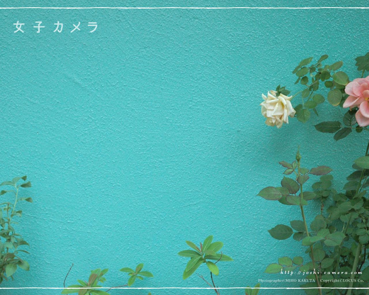 おしゃれな花の壁紙 Ramica