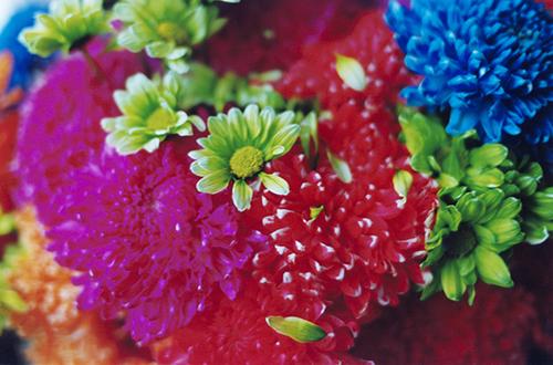 色とりどりの華やかな花の壁紙 Ramica